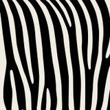 Muster Nachgemachter Druck der Haut des Zebras Schwarze Streifen auf grauem Hintergrund Lizenzfreies Stockbild
