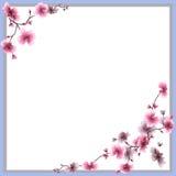 Muster-Rosablumen des Aquarells nahtlose der Pflaume auf einem weißen Hintergrund Stockfoto
