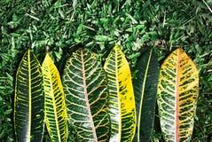 Muster und buntes von Blättern auf Grashintergrund Lizenzfreies Stockfoto
