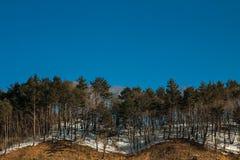 Muster von Bäumen Lizenzfreies Stockbild