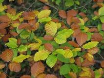 Muster von Blättern in einem Wald Stockfoto