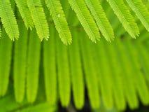 Muster von Cha Green Leaf Stockfotos