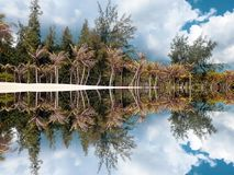 Muster von den Palmen nahe Wasser stockbilder