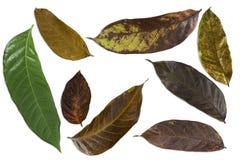 Muster von frischen Blättern und von getrockneten Blättern Lizenzfreies Stockbild