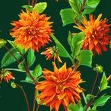 Muster von Georgina-Blumen mit Blättern 3 Stockfotografie