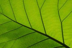 Muster von grünen Blättern Stockbilder