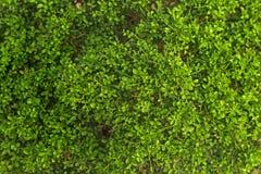 Muster von grünen Blättern Lizenzfreie Stockfotografie