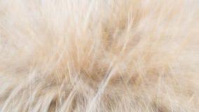 Muster von Grasunschärfeschuss- und -goldfarben Stockfotografie