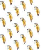 Muster von Porträts von Tukanen mit einem großen Schnabel lizenzfreie abbildung