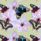 Muster von Schmetterlingen und von Blumen auf einem hellen Hintergrund stock abbildung