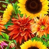 Muster 2 von Sonnenblumen mit Dahlien Stockbild