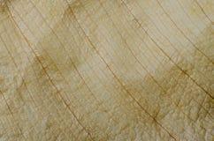 Muster von trockenen braunen Blättern Lizenzfreies Stockfoto
