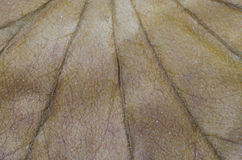 Muster von trockenen braunen Blättern Stockbild