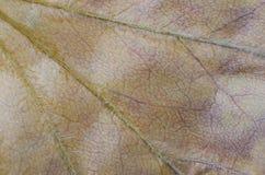 Muster von trockenen braunen Blättern Lizenzfreie Stockfotos