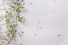 Musterbeschaffenheit mit grünen trockenen Blättern hüpfen auf weißem Hintergrund Flache Lage, minimales Konzept der Draufsicht stockfoto
