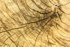 Musterhintergrundbäume, die geschnitten werden Stockfotos