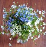 Musterprimelnahaufnahmefarbblüht blühender Blattwald makro gelbes Blumenwiesenblumenblattgrasblütenblütenflora-Weiß flo Stockbilder