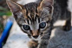 Mustert Nahaufnahme des kleinen Kätzchens Stockbild