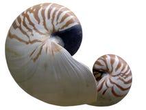 muszle morskie Obrazy Royalty Free