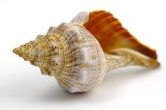 muszle morskie Zdjęcia Stock