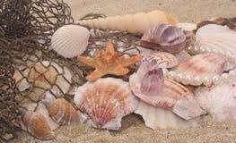 muszle morskie Zdjęcie Stock