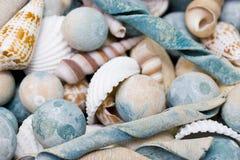 muszle morskie Obraz Royalty Free