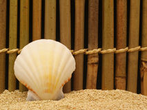 muszle morskie Obrazy Stock