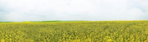 Musztardy pole, musztarda rolny Luksemburg, Europa Zdjęcia Royalty Free