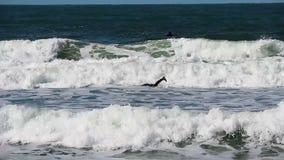 Muta umida d'uso del surfista che rema fuori nelle onde di oceano stock footage