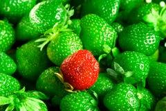 Mutant de fraises photographie stock