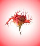 Mutant flower. Picture of a Mutant flower stock illustration