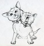 Mutant kitten with two heads. Mutant two-headed kitten. One head calmly looks up, other head yawns. Very cute little pet wearing two collars with bells. Ink Stock Image