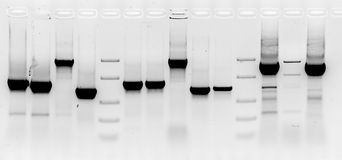Free Mutation Screening Royalty Free Stock Photos - 55559818
