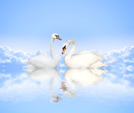 Mute swan on blue water Stock Image