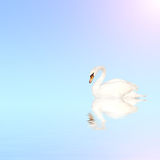 Mute swan on blue water. On sunny sky background with reflection in waves. Copy space for your text Stock Photography