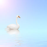 Mute swan on blue water. On sunny sky background with reflection in waves. Copy space for your text Royalty Free Stock Photos