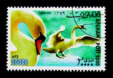 Mute Swan (Cygnus olor), International Stamp Exhibition WIPA '00. MOSCOW, RUSSIA - NOVEMBER 25, 2017: A stamp printed in Afghanistan shows Mute stock photography