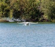 Lake Take off Stock Images