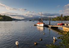 Mute swans, ducks and fishing boat bathed in afternoon light- Lake Windermere Stock Photos