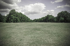 Muted green field of grass and trees background Stock Photography