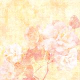 Muted roses. Muted yellow and peach roses on pale golden flourished background Royalty Free Stock Photos