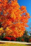 Mutige Farben des Herbstes lizenzfreies stockbild