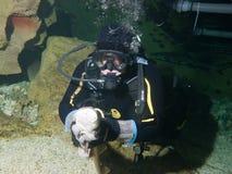 Mutiger Taucher und kleiner Krankenschwesterhaifisch Stockfoto