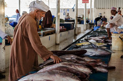 Mutrah Old Fish market Oman. MUTRAH, OMAN - CIRCA OCTOBER 2013 - An unidentified man inspects a line of freshly caught fish. The old fish market is due to be Royalty Free Stock Photography