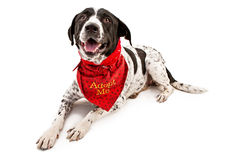 Mutt for Adoption Stock Photo