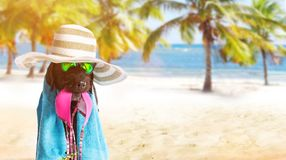 Funny summer black dog with summer accessories. Stock Images