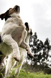 Mutt dogs Royalty Free Stock Photos