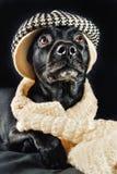 Mutt negro lindo Imagenes de archivo