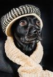 Mutt preto bonito Imagens de Stock Royalty Free