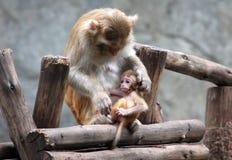 Mutter-Affe und Sohn Stockfotografie